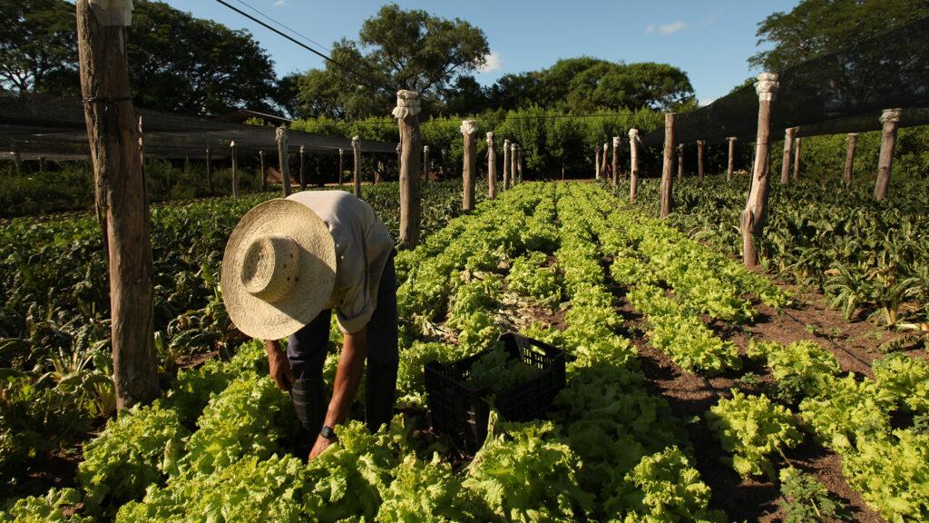 El proyecto busca ampliar en la provincia una ley marco para la implementación de Buenas Prácticas Agropecuarias.